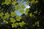 Les fulles